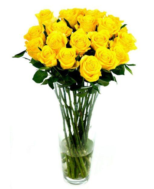Roses - Yellow