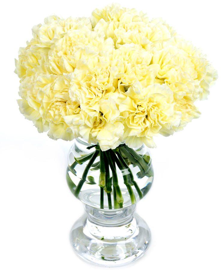Carnations - Cream